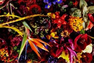 Encyclopedia of Flowers Flower Works by Makoto Azuma