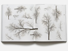 Neubau: Forst Catalogue - Urban Tree Collection for the Modern Architect & Designer
